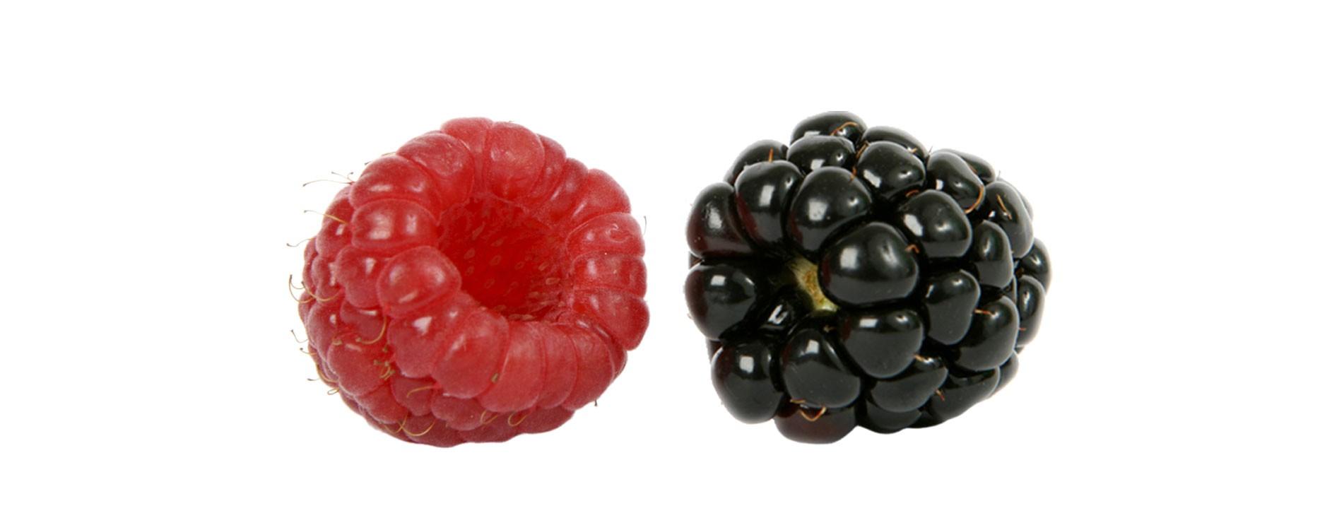 Fruta fresca distribuida en la industria
